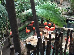 "Flamingos at the Dallas Aquarium • <a style=""font-size:0.8em;"" href=""http://www.flickr.com/photos/109120354@N07/27856423285/"" target=""_blank"">View on Flickr</a>"