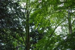 DP2Q4013lr (yoshitoshi ABe) Tags: sigma   dp2quattro 20160625