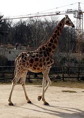 Ze ZOO Praha 2011 Berta (sebjozef) Tags: animal animals zoo prague prag praha praga