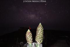 IMG_9769 copy (Aaron Lynton) Tags: canon silver way stars long exposure sigma haleakala crater swords silversword milky milkyway lyntonproductions
