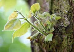 IMG_4612 (Irina Souiki) Tags: parcdesceaux france paris sceaux flowers nature parc park