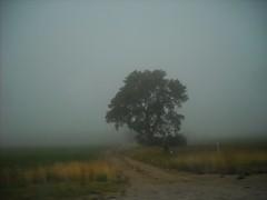 iowa fog (TMQ.st.louis) Tags: lonetree rural farm fog iowa