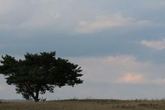 Sonnenuntergang (Klaus R. aus O.) Tags: sunset sky sun tree field clouds sonnenuntergang feld himmel wolken farmland sonne baum acker steigerwald oberschwappach