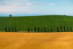 """Paesaggi """"Fontaniani"""" (Ondablv) Tags: coline monferrato val dorcia cipressi erba collina terre freccia filare alberi tree campo campi giallo verde coltivato minimal coltivati green ondablv clear colline hill hills fontana"""