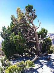 20130414-00509.jpg (theoszi) Tags: mountain tree nature rock flora lasvegas nevada places redrock feature