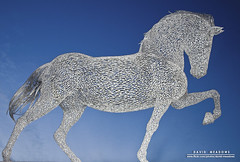 Metal Horse (DMeadows) Tags: light sculpture horse metal night scotland greenock mare steel tail low equestrian stallion mane whythelongface davidmeadows dmeadows davidameadows dameadows