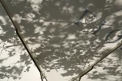 Platons Sonnenschirmgleichnis (Thilo Schmautz) Tags: ste bltter schatten baum ulm sonnenschirm