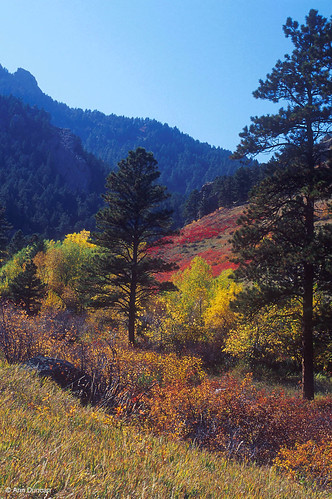 Photo - Fall colors in Gregory Canyon.