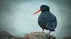 Layered Bird (Edster951) Tags: fbdg