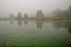 A Foggy Morning (Seth Oliver Photographic Art) Tags: morning reflections landscapes illinois nikon midwest foggy pinoy lakecounty circularpolarizer chicagoist d90 wetreflections handheldshot lakecountyforestpreserve nippersinkforestpreserve setholiver1 1024mmtamronuwalens