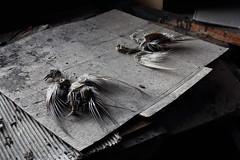 IMG_7609B (chewyteeth) Tags: bird mill dead skeleton shoe factory pigeon sheffield derelict delapidated urbex