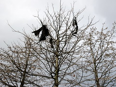 (turgidson) Tags: ireland winter black tree trash digital bag studio ed four lumix raw angle wind zoom 5 g bare wide version wideangle olympus bin m panasonic developer micro rubbish pro mm caught wicklow zuiko bray dmc thirds liner vevay m43 silkypix gh2 f4056 mirrorless 50450 lumixg microfourthirds 918mm olympusmzuikodigitaled918mmf4056 panasonicgh2 olympusmzuikodigitaled918mmf4056mm panasoniclumixdmcgh2 p1170770 silkypixdeveloperstudiopro5