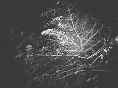 Snowy tree at night 1 (Citizen 4474) Tags: winter bw plants snow abstract cold tree ice monochrome pine night lumix shadows branches spotlight panasonic subjects gx1