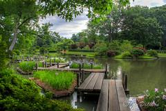 Summer Gardens (Jon Dickson Photography) Tags: mygearandme mygearandmepremium mygearandmebronze mygearandmesilver mygearandmegold mygearandmeplatinum