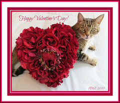 Love, Desire, Romance... Valentine's Day! (bigbrowneyez) Tags: roses party love beautiful dedication rose cat fun furry dof sweet tail kisses chocolates romance celebration dolce desire baci bebe hugs fiori tenderness embraces thoughtfulness saintvalentinesday buonsanvalentino