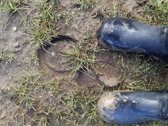 Horseshoe prints in the mud (essex_mud_explorer) Tags: horses print mud prints horseshoe wellies muddy vision:plant=0613 vision:outdoor=0972 vision:sky=0523