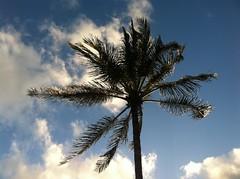 HAWAIIAN ISLAND Impressions One (Hawaii on the Move) Tags: hawaii oahu hawaiianislands hawaiitravel hawaiiscenics vision:outdoor=0974 vision:sky=0826 hawaiionthemovecom hawaiianislandimpressionsone