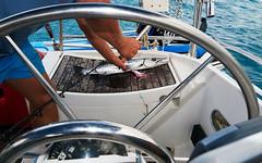 Barracuda fishing (wolf4max) Tags: ocean sea food fish fishing carribean barracuda natre carribeanfish