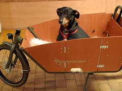 WorkCycles-Kr8-Doggie-Door 5 (@WorkCycles) Tags: door dog amsterdam box hond customer custom doggie deur bak honden bakfiets transportfiets workcycles kr8