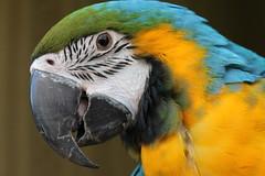 The Happier one (potent2020) Tags: old bird happy wildlife parrot birdwatcher oldparrot lookshappy redmatrix canon70d