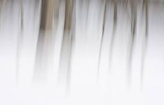 edwinloyolaNewYorkPortfolioReviewWinter02 (Edwin Loyola) Tags: autumn winter summer abstract fall nature seasons fineart fourseasons icm esl intentionalcameramovement edwinsloyola edwinloyola edwinloyolaphotography eslphotography