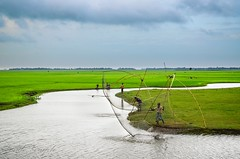 A part of Bangladesh-2 (Ami VONDo) Tags: fish fisherman nikon monsoon catching raining bangladesh canel mehrab d5100 saifuzaman bbariya