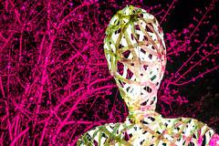 Winterlicht-Palmengarten-150111-1055.jpg (Pfenya) Tags: camera longexposure winter light gardens germany garden season botanical deutschland lights licht europa fuji hessen frankfurt jahreszeit jardim botanicalgarden palmengarten garten kamera frankfurtammain longtimeexposure botanischergarten botanischer lightinstallation lichtinstallation palmengartenfrankfurt winterlicht xe2 winterlichter fujixe2