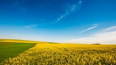 Sauerland, Germany (gertvanbinsbergen) Tags: yellow sauerland hochsauerland