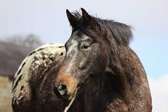 Calver 028 (Slimboy Fat) Tags: derwentvalley calver derbyshire england uk