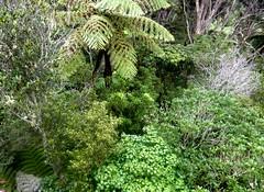 Off the Beaten Track (sallyNZ) Tags: bush waitakereranges offthebeatentrack scavenger7 nativebushnewzealand