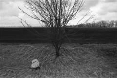 Grass - sky, stone - tree, arable land - forest belt (misha maslennikov) Tags: bw film nikon russia don f3 steep maslennikov otherrussia krivoborie