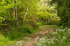 Spring Lane, Sheffield (Peter Quinn1) Tags: gate sheffield naturereserve birch broom hawthorn rotherham cowparsley blacburnmeadows wildlifetrustforsheffieldandrotherham