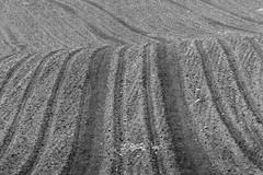 Tracks in the Field (Michael Eickelmann) Tags: bw white black monochrome field mono tracks feld spuren sw muster schwarz weis einfarbig eintnig
