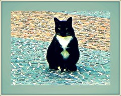O negro gato. (o.dirce) Tags: praia cat calada odirce