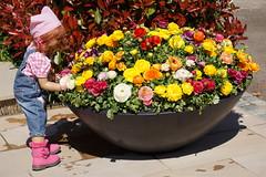 Gartenliebe ... (Kindergartenkinder) Tags: ranunkeln sanrike blumen lavendel personen dolls himstedt annette ilce6000 sony essen park gruga kindergartenkinder