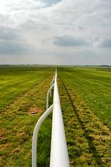 Down the gallops (pmryderesq) Tags: landscape nikon racing horseracing newmarket nikond3200 landscapephotography rowleymile amateurphotographer amateurphotography