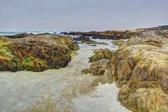 Between the Rocks (joe Lach) Tags: asilomarstatebeach rocks pacificocean sand wet moss algae water waterpictorial pacificgrove montereybay montereypeninsula california joelach
