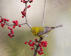 Berries and Bird