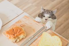 That new lens test (VenhuizenM) Tags: d5200 tamron 2470 24 70 f28 cat cats animals breakfast morning monday netherlands