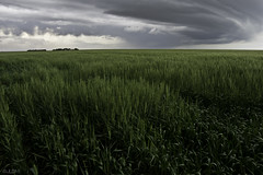 Calm Before the Storm (JLDMphoto) Tags: summer sky food storm west green art nature clouds garden season spring nikon farm farming front 14mmf28 ag kansas serene agriculture wheet greatplains d7200