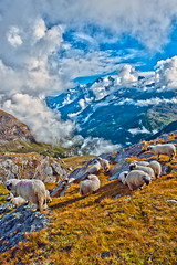 """Draw me a sheep, dessin moi un mouton. "" Morning time near the Schwazrsee , In the back You can see the Dom Mountain (Alt, 4545 m ) . No. 2382. (Izakigur) Tags: alps alpes alpen alpi zermatt matterhorn mouton thelittleprince dieschweiz d700 morning lepetitprince nikond700 nikkor1755f28 swiss suiza suisia sussa suizo switzerland schweiz lasuisse laventuresuisse liberty free izakigur topf25 topf400"