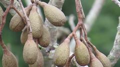 funny tree fruit