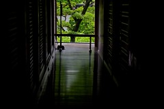 Green Reflection (tez-guitar) Tags: summer tree leaves temple maple kyoto pentax sigma pentaxart