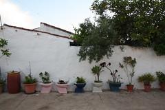 a prova de que o xixi faz crescer plantas (LetsLetsLets) Tags: plants portugal plantas grow wc piss recycle alentejo reciclagem maio vater 2016 sanitas sãodomingodeminas