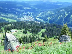 Picture postcard Sun Peaks (Ruth and Dave) Tags: flowers trees forest rocks village view boulders skiresort valley foreground sunpeaks alpineflowers alpinemeadow sunpeaksresort todmountain crystalzone mtmorissey