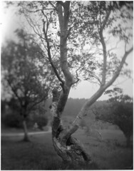 Emerging shower (Mark Dries) Tags: film 150 4x5 rodinal tilt largeformat graflex 135mm crowngraphic xenar schneiderkreuznach 100iso filmphotography fomapan markguitarphoto markdries