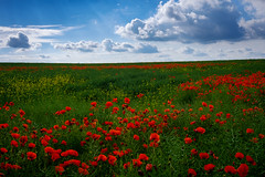 Poppies in June (Christopher Combe Photography) Tags: blue red summer sky cloud green field june fuji x poppies 27mm fujixm1