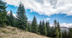 Hiding behind the Pines (Alex Demich) Tags: blue trees wild sky panorama white mountain snow mountains tree green tourism nature grass pine clouds forest landscape cycling spring woods cloudy outdoor hiking snowy ukraine ridge climbing pines wilderness carpathians carpathian hoverla cloudsstormssunsetssunrises