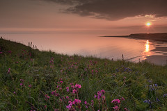 Evening (jillyspoon) Tags: sunset cliff bluebells canon see evening coast scotland view toast horizon sigma coastal wildflowers galloway campion dumfriesandgalloway monreith sigma1020 canon70d