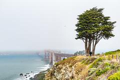 Fog Shrouded Golden Gate Bridge (Serendigity) Tags: california usa sanfrancisco goldengate mist surf fog coast trees bridge